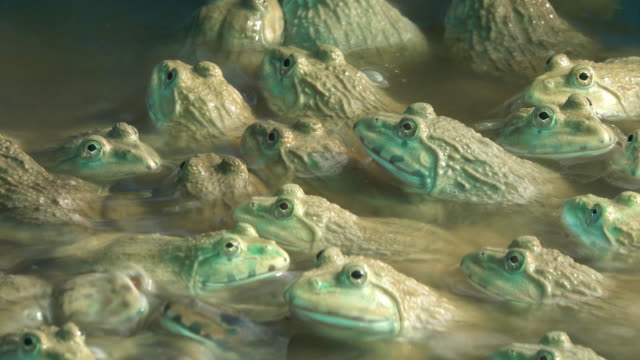 Group of frog video