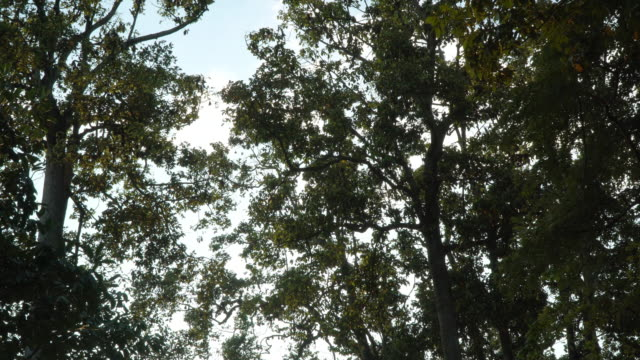 a group of hens bat perched on the rubber field. - appollaiarsi video stock e b–roll