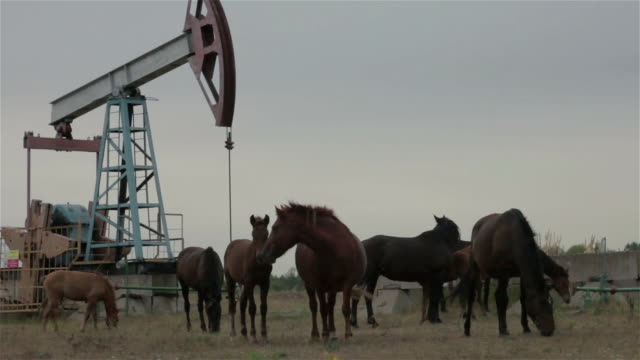 a group of horses is grazed near pump jack - stallone video stock e b–roll