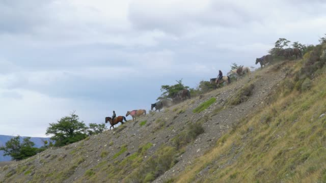 Group of horses walking downhill in the Torres del Paine National Park Group of horses walking downhill in the Torres del Paine National Park sorpresa stock videos & royalty-free footage