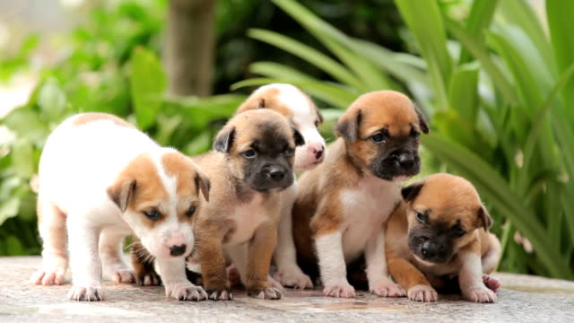 Group of little puppies dog Close up group of little puppies dog puppy stock videos & royalty-free footage