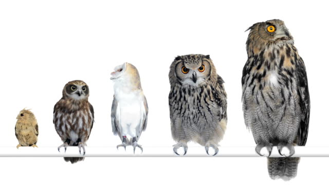 stockvideo's en b-roll-footage met group of owls perched and looking around - uil