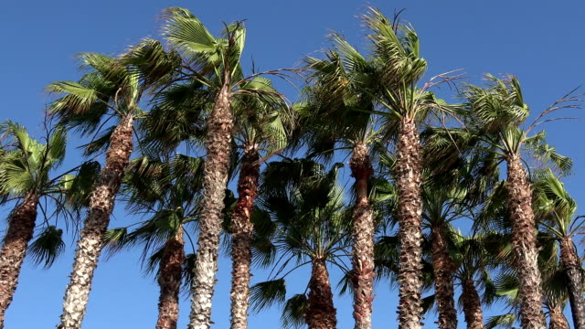 vídeos de stock e filmes b-roll de group of palm trees in a tropical location - árvore tropical