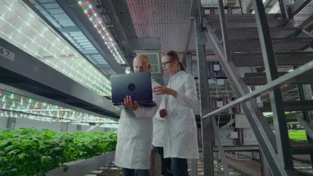 A group of people in white coats with a laptop and a tablet on a hydroponic farm contribute research data on vegetables to the data center for analysis and programming of plant irrigation A group of people in white coats with a laptop and a tablet on a hydroponic farm contribute research data on vegetables to the data center for analysis and programming of plant irrigation. hydroponics stock videos & royalty-free footage