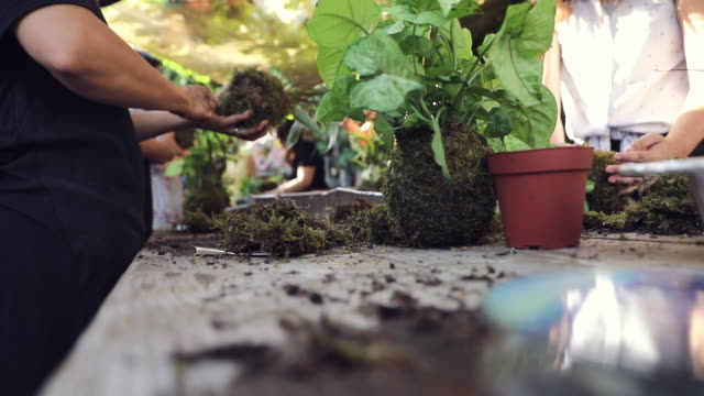 Group of people learning ornamental gardening with Kokedama Japanese technique Group of people learning ornamental gardening with Kokedama Japanese technique ornamental garden stock videos & royalty-free footage