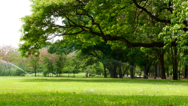 Group of People Relaxing in Green Park video