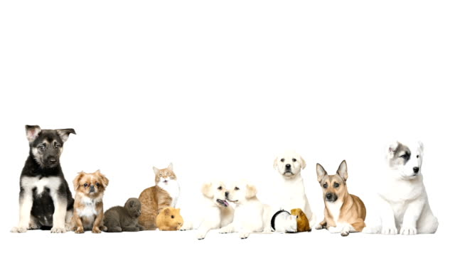 group of pet on a white background