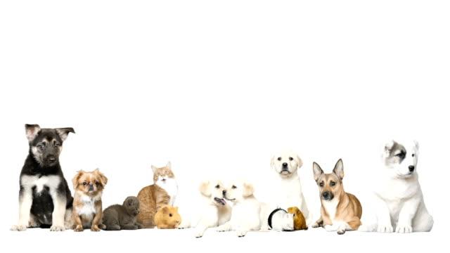 Grupo de mascota sobre un fondo blanco - vídeo