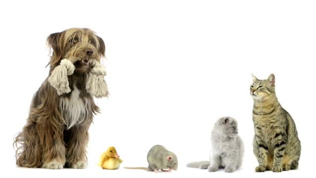 vídeos de stock, filmes e b-roll de grupo de animais de estimação, sentado - fundo branco