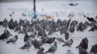 istock A group of pigeons near the seaside 1197844599