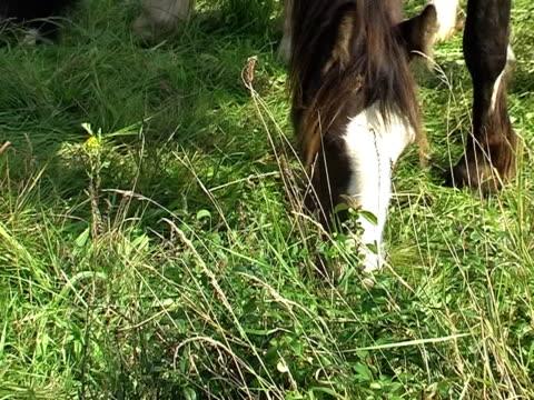 gruppe von ponys - pferdeartige stock-videos und b-roll-filmmaterial