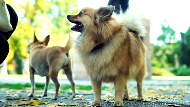 Group of purebred dogs in park video