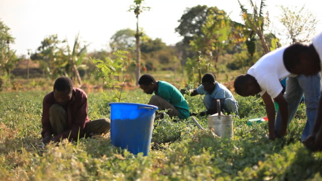 Group of rural African farmers working in garden video