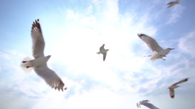 slo mo group of seagull bird flying on the blue sky - battere le ali video stock e b–roll