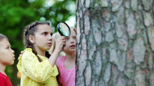 grupp av tre nyfikna barn med förstoringsglas undersöker insekter på träd bark i parken, medium tracking shot - kameraåkning på räls bildbanksvideor och videomaterial från bakom kulisserna