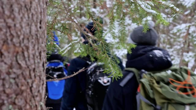 a group of tourists with backpacks on their shoulders goes through the winter forest. - viaggiare zaino in spalla video stock e b–roll