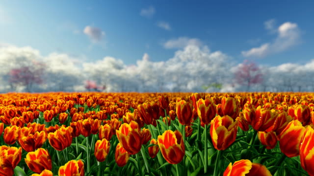 Group of tulips in the sunlight against the blue sky. video