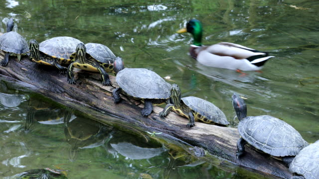 Group Of Turtles On The Wooden Trunk video