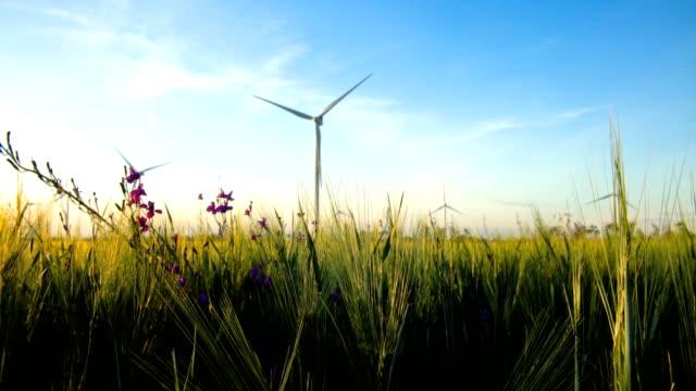 vídeos y material grabado en eventos de stock de grupo de molinos de viento para la producción de energía eléctrica en el verde campo de trigo - generadores