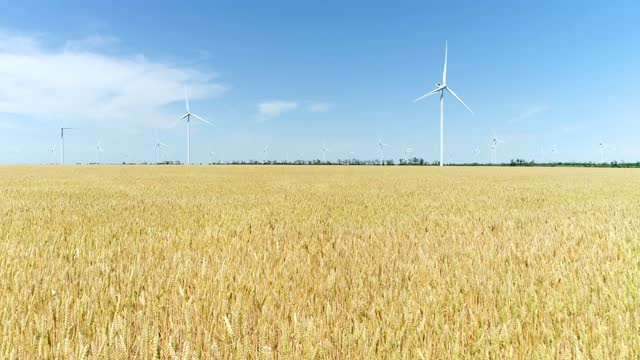 Group of windmills for electric power production in the yellow field of wheat. Aerial view.