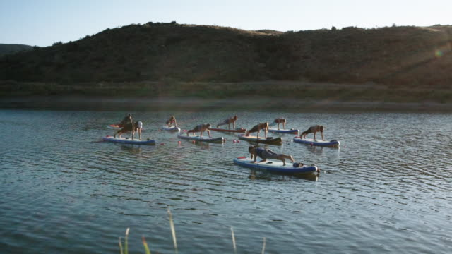 A Group of Women in Chaturanga Dandasana and Upward Facing Dog Yoga Positions on Paddleboards on a Desert Lake Under a Clear, Blue Sky in Western Colorado (Snooks Bottom)