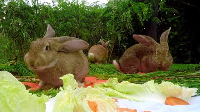 gruppe von jungen flämischen riesen-kaninchen im garten - nutztier oder haustier stock-videos und b-roll-filmmaterial