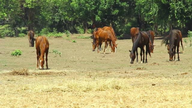 groupe di cavallo in ranch farm, hd - stallone video stock e b–roll