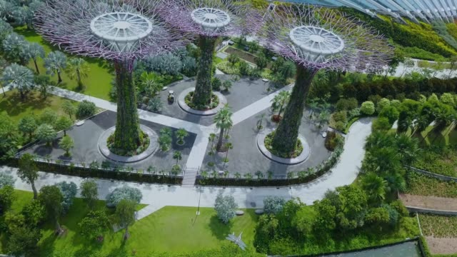 Grove Gardens in Singapore Grove Gardens in Singapore. Tropical trees mixed with urban architecture singapore architecture stock videos & royalty-free footage