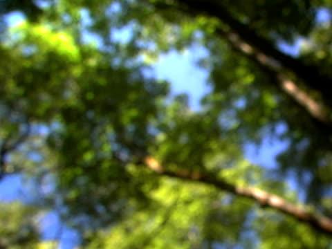 boschetto di alberi  - parte della pianta video stock e b–roll