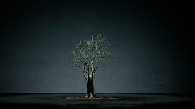 Animación de lapso de tiempo del árbol de bonsai creciente - vídeo