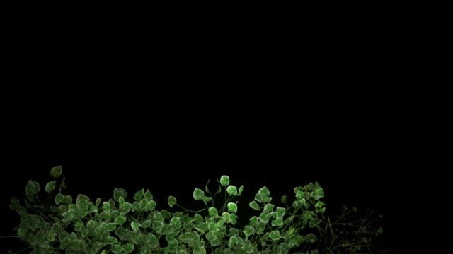 cornice di fiori in crescita - vite flora video stock e b–roll