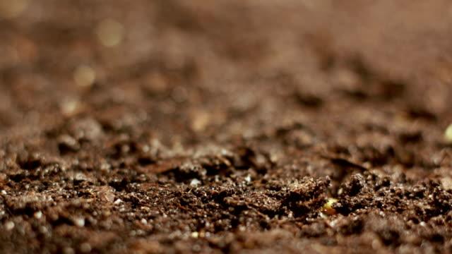 成長のグリーン マスタードの植物農業春タイムラプス - 苗点の映像素材/bロール