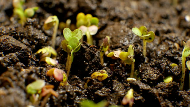 Growing Green Plants Agriculture Timelapse video