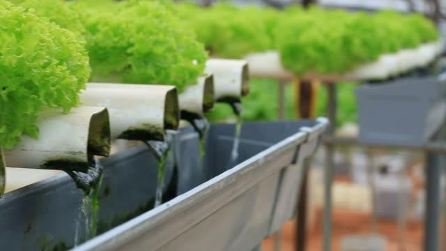 wachsende hydrokultur gemüse - urban gardening stock-videos und b-roll-filmmaterial