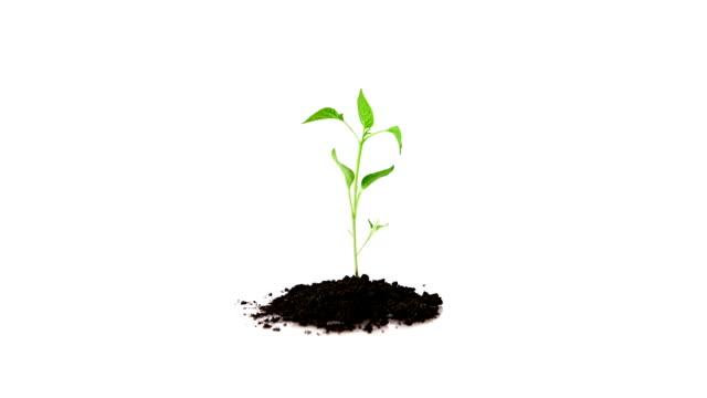 рост растение - побег стоковые видео и кадры b-roll