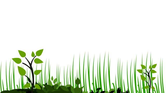 vídeos y material grabado en eventos de stock de cultivo de plantas - hierba planta
