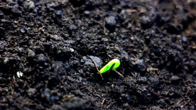 地面に成長する小さな植物を成長させる。時間の経過。ライフサイクル、新しいアイデア、春の時間を象徴する美しい自然、。 - 苗点の映像素材/bロール