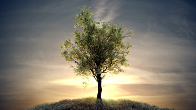 Growing tree against sun at dawn video