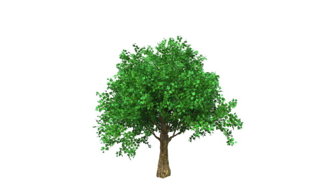 Growing tree, colored