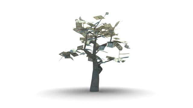 Growing Tree of One US Dollars
