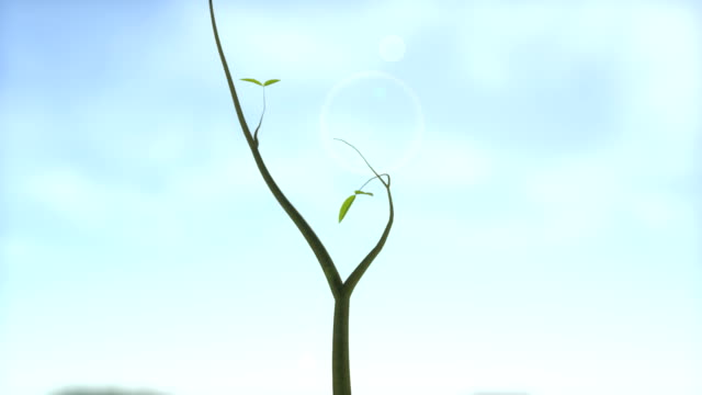 Growing tree with sunny background