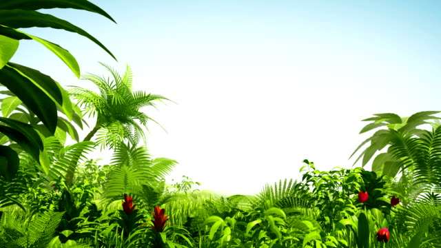 Growing tropical forest video