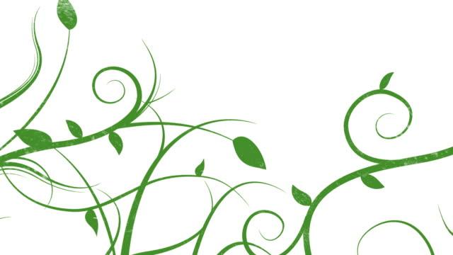 crescita vines-loop - vite flora video stock e b–roll
