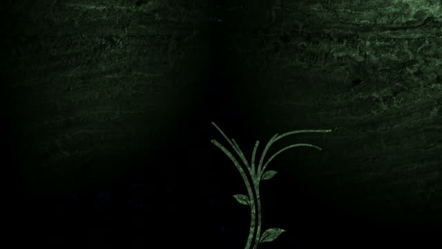 Growing Vines - Progressive 30 fps. video