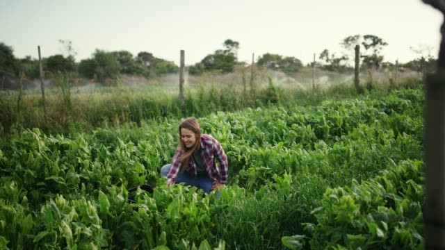 Growing your own is good for the planet 4k video footage of an attractive young woman working in a greenhouse on her farm agricultural occupation stock videos & royalty-free footage