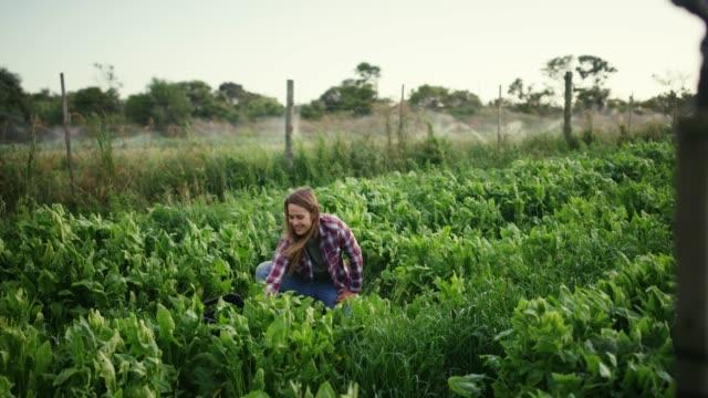 vídeos de stock e filmes b-roll de growing your own is good for the planet - colher atividade agrícola