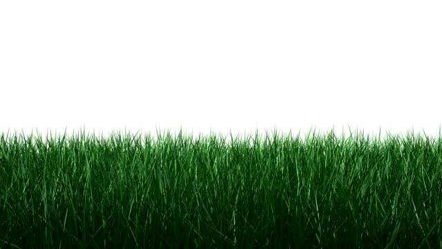 Growth of Grassland HD 1080 video