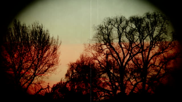 Grunge Vintage Sunrise with Sillouette Trees