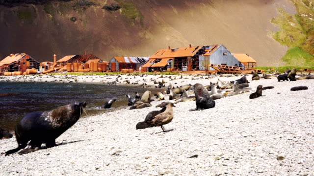 Grytviken and Leith Harbour Grytviken and Leith Harbour grytviken stock videos & royalty-free footage