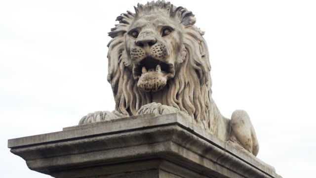 Guardian Lion At The Chain Bridge In Budapest Real time shot in 4K/Ultra High Definition hungary stock videos & royalty-free footage
